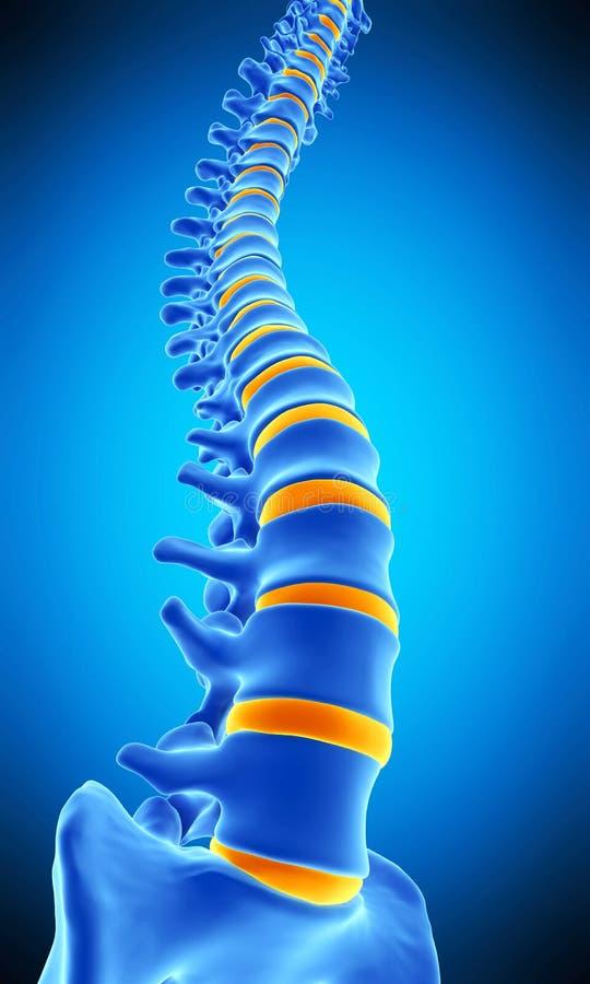 La spina dorsale umana illustrazione vettoriale