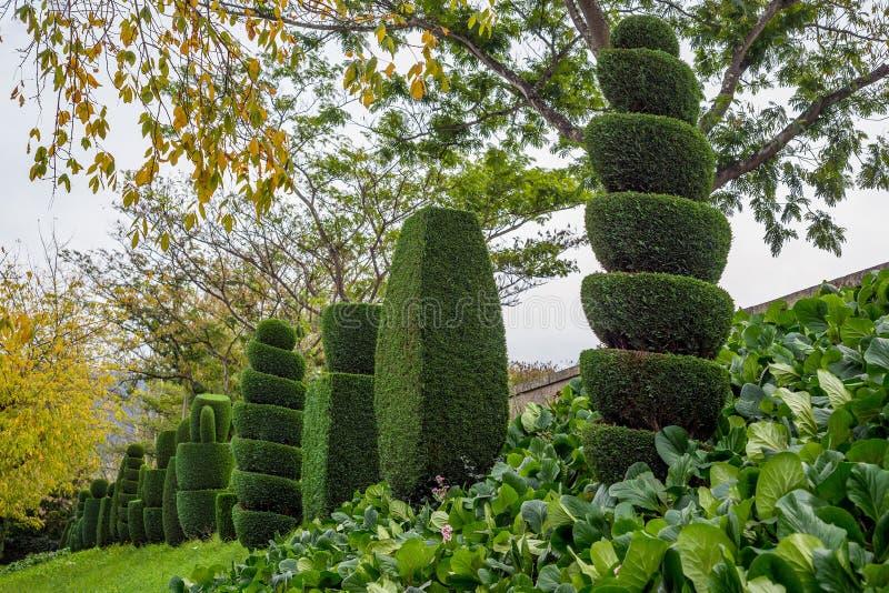 La spirale topiaire d'horticulture d'arbre a coupé le pin impeccable de thuja que beaucoup font du jardinage photographie stock libre de droits