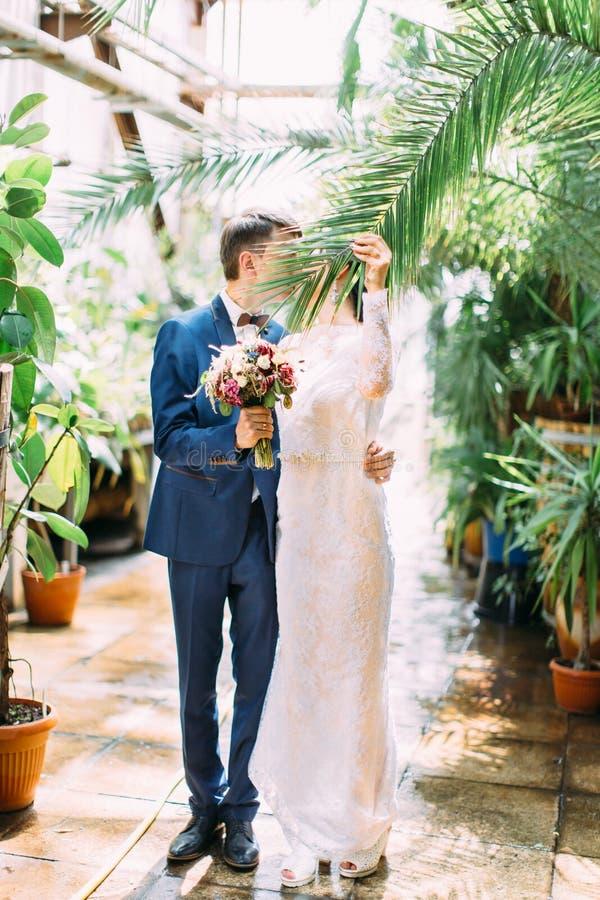La sposa sta tenendo la foglia della palma per chiudere il bacio con lo sposo Posizione della serra fotografia stock libera da diritti