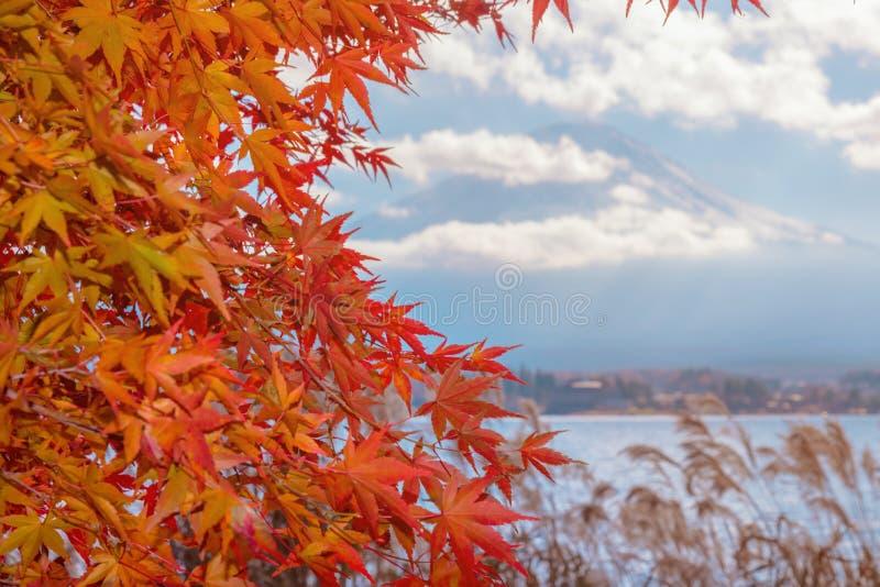La stagione variopinta di autunno & la montagna Fuji nella nebbia e nel rosso di mattina va nel lago Kawaguchiko, Giappone fotografia stock libera da diritti