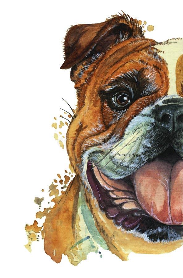 La stamperia dell'acquerello, stampa sul tema della razza dei cani, i mammiferi, animali, cresce bulldog inglese, il bulldog, il  illustrazione vettoriale