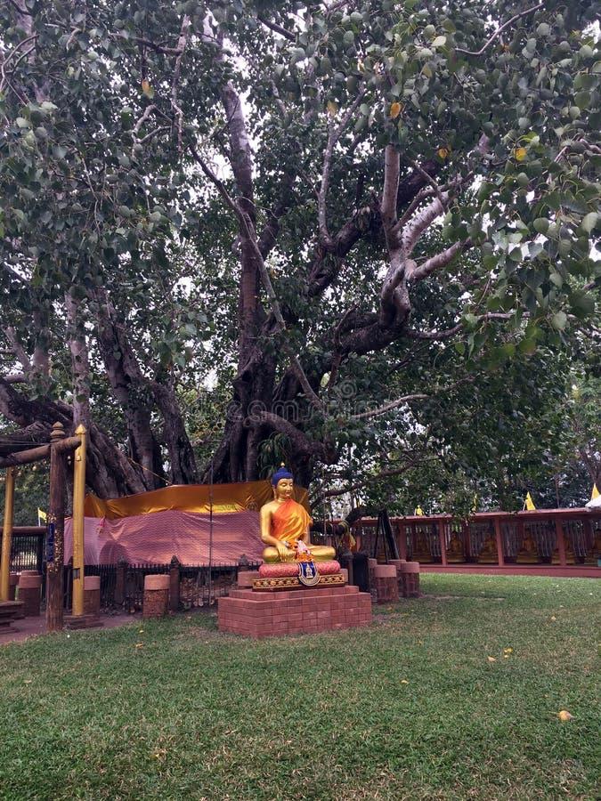La statua d'ottone Buddha si siede con pacifico sotto l'albero delle pagode immagini stock libere da diritti