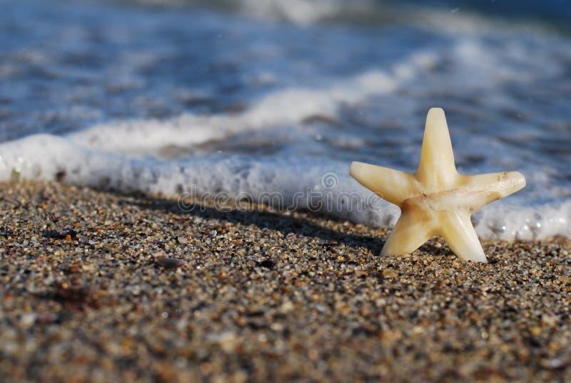 La stella sulla spiaggia fotografia stock