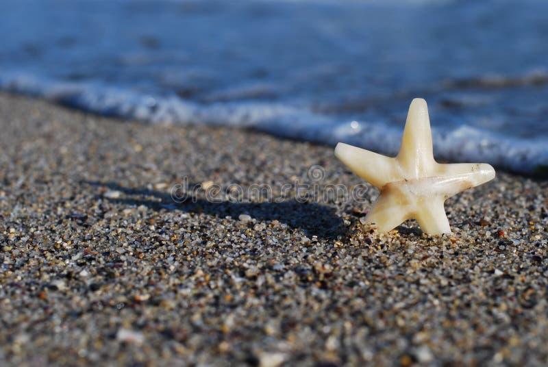 La stella sulla spiaggia immagine stock libera da diritti