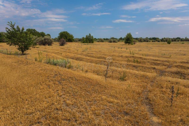 La steppa o la prateria russa di Volgograd a luglio con le querce, l'erba e le nuvole immagini stock