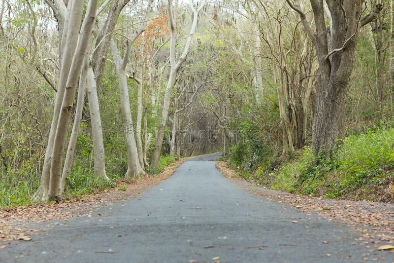 La strada è vuota in autunno nella sera dei giorni luminosi fotografie stock libere da diritti
