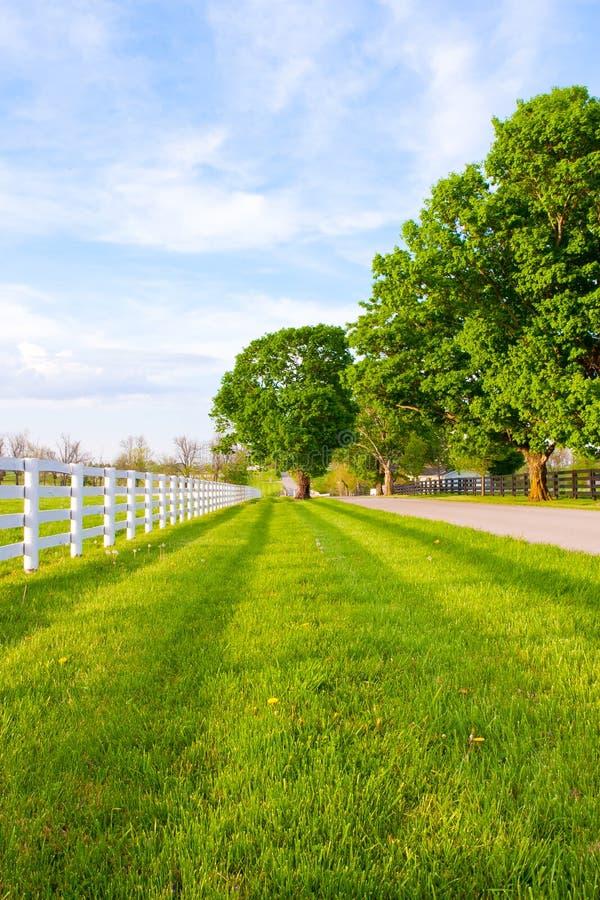 La strada campestre ha circondato le aziende agricole del cavallo fotografie stock