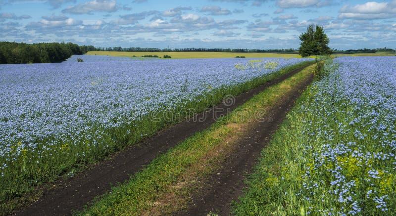 La strada che passa attraverso i campi di lino di fioritura fotografie stock libere da diritti