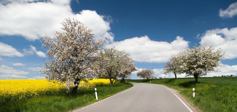 La strada con il vicolo di di melo ed il seme di ravizzone sistemano fotografia stock libera da diritti