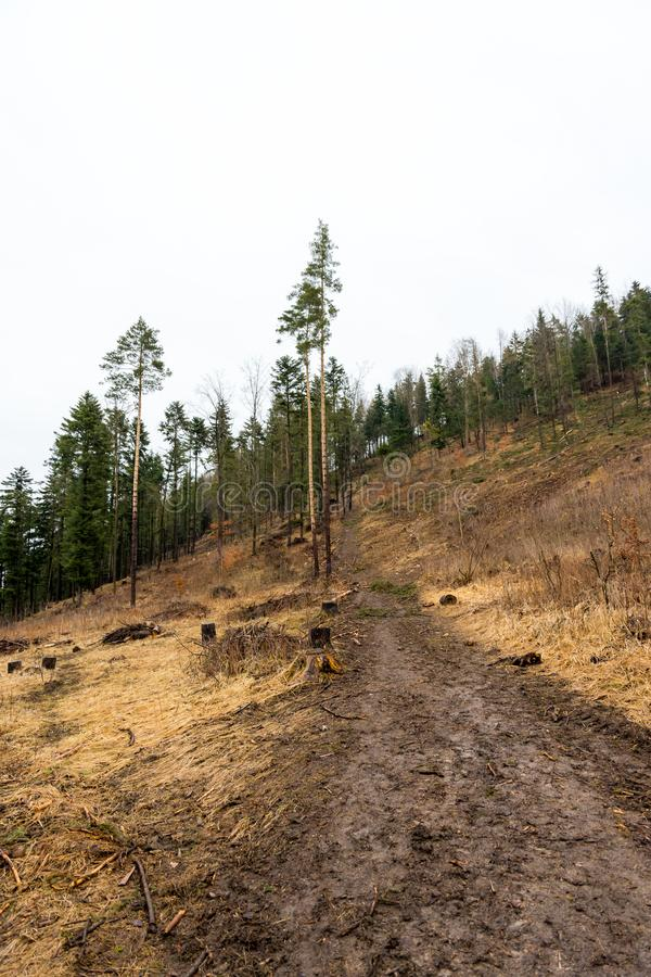 La strada del fango sulla collina nel modo della foresta per il turista di avventura fotografia stock libera da diritti