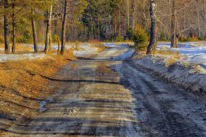 La strada della primavera nella primavera della foresta sta venendo immagini stock