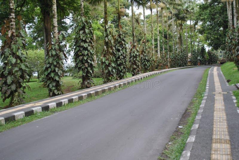 La strada nell'area del giardino botanico di Bedugul Bali fotografie stock