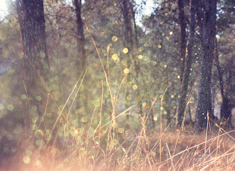 La strada nello scoppio della luce e della foresta ha elaborato l'immagine come la fantasia o concetto magico fotografia stock libera da diritti