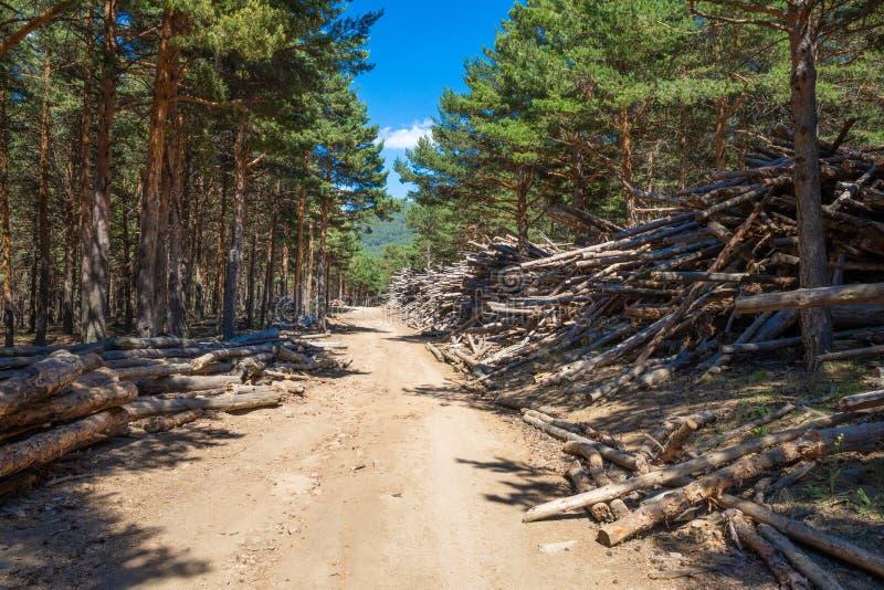 La strada rurale nella foresta del pino circondata dall'impilato da collega la montagna di Canencia vicino a Madrid fotografie stock
