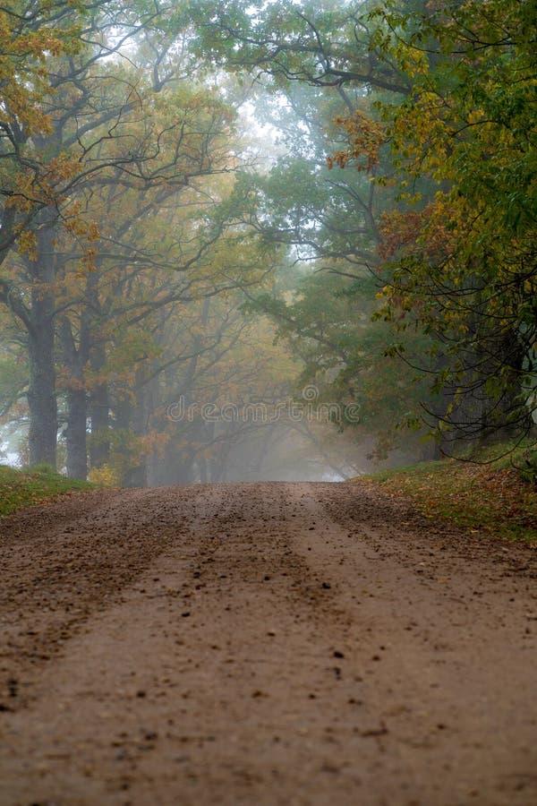 La strada rurale passa tramite vicoli i grandi di un albero fotografie stock libere da diritti