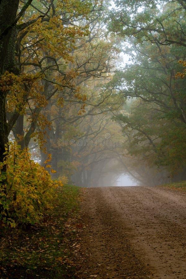 La strada rurale passa tramite vicoli i grandi di un albero immagine stock