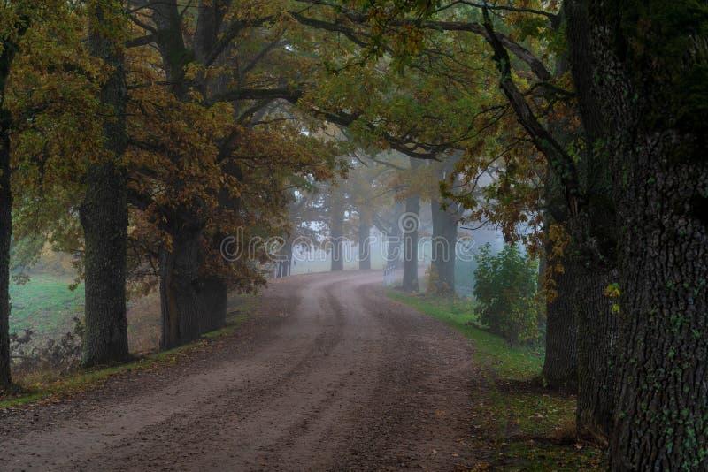 La strada rurale passa tramite vicoli i grandi di un albero fotografia stock