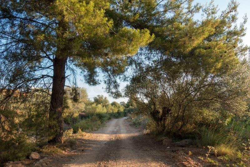 La strada a Santiago e via Augusta in Castellon fotografia stock libera da diritti