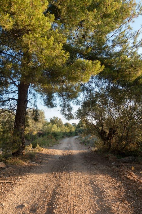 La strada a Santiago e via Augusta in Castellon fotografie stock libere da diritti
