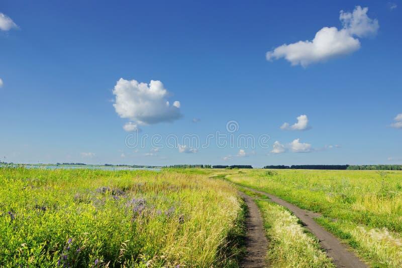 La strada in un campo sbocciante al bianco del cielo blu del lago si appanna immagine stock libera da diritti