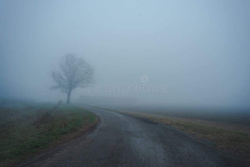 La strada vuota e l'albero isolato nella foschia fotografia stock libera da diritti