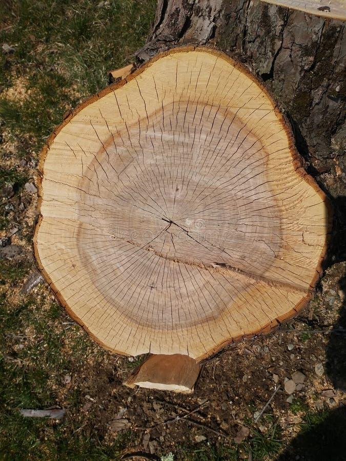 La structure de l'arbre photographie stock