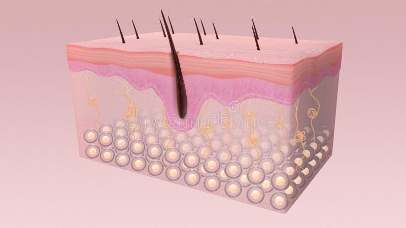 La structure de peau photographie stock libre de droits
