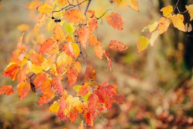 La struttura del fondo di giallo lascia Autumn Leaf Background urlo fotografie stock libere da diritti