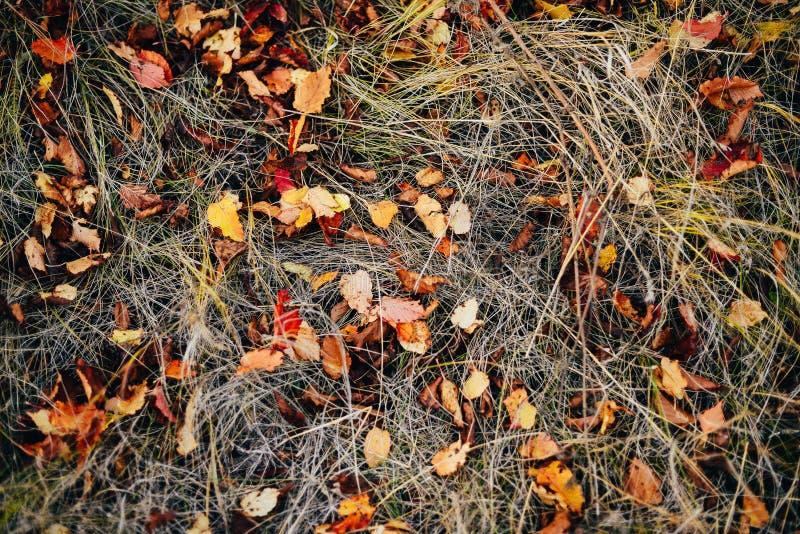 La struttura del fondo di giallo lascia Autumn Leaf Background urlo immagini stock