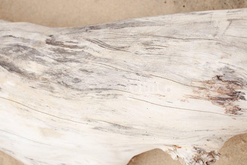 La struttura del legno bianco secco sulla sabbia immagini stock libere da diritti