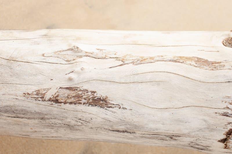 La struttura del legno bianco secco sulla sabbia fotografia stock libera da diritti
