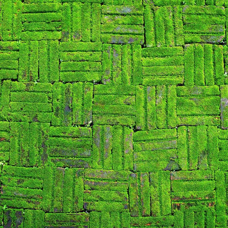 La struttura del muro di mattoni di vecchia parete di pietra ha coperto il muschio verde immagini stock