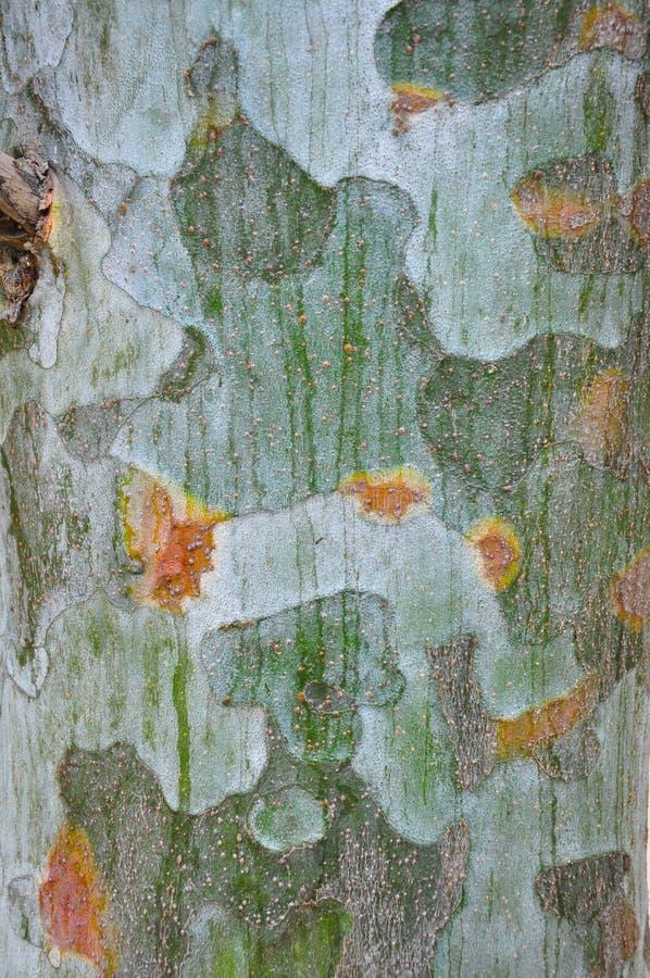 La struttura della corteccia di albero immagine stock