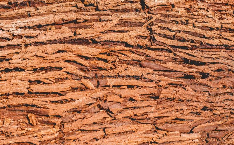 La struttura della corteccia spessa marrone di un albero fotografia stock libera da diritti