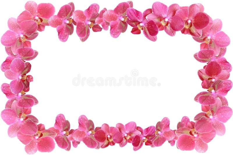 La struttura della foto fatta dell'orchidea fiorisce con le gocce di rugiada isolata da fondo fotografia stock