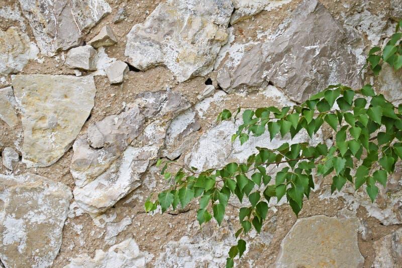 La struttura della parete di pietra fotografia stock libera da diritti