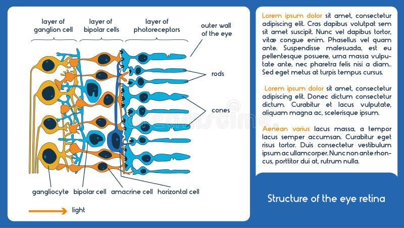 La struttura della retina dell'occhio illustrazione di stock