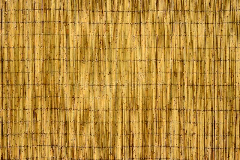 La struttura delle canne asciutte Canne gialle Un recinto fatto delle canne immagini stock libere da diritti