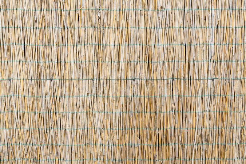 La struttura delle canne asciutte Canne gialle Un recinto fatto delle canne Erba asciutta immagini stock