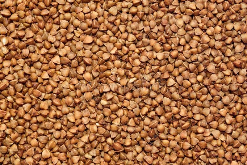 La struttura di grano saraceno immagine stock libera da diritti