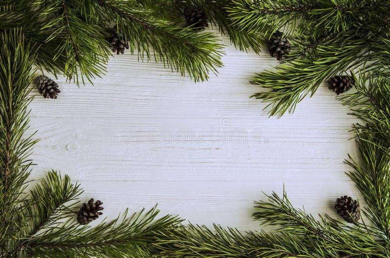 La struttura di Natale di verde del pino si ramifica e pigne fotografia stock libera da diritti