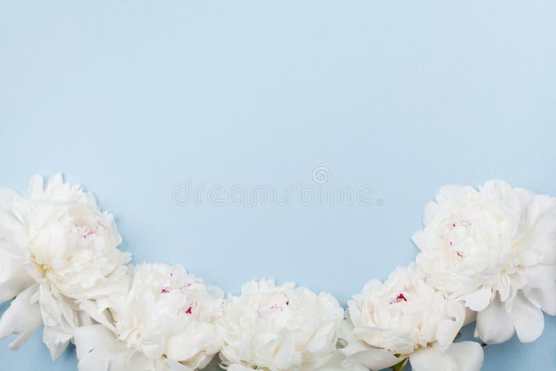 La struttura di nozze fatta di bella peonia bianca fiorisce sulla tavola pastello blu Vista superiore e stile piano di disposizio immagine stock