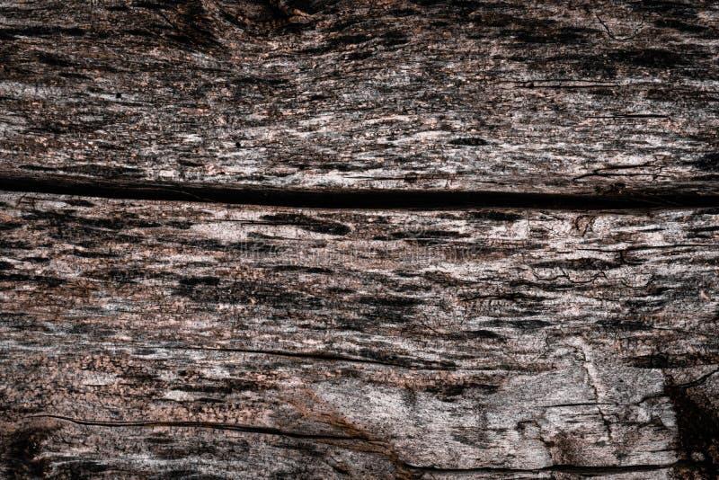 La struttura di vecchio albero marcio con le crepe e le irregolarit? della corteccia Carte da parati del volume fotografia stock libera da diritti