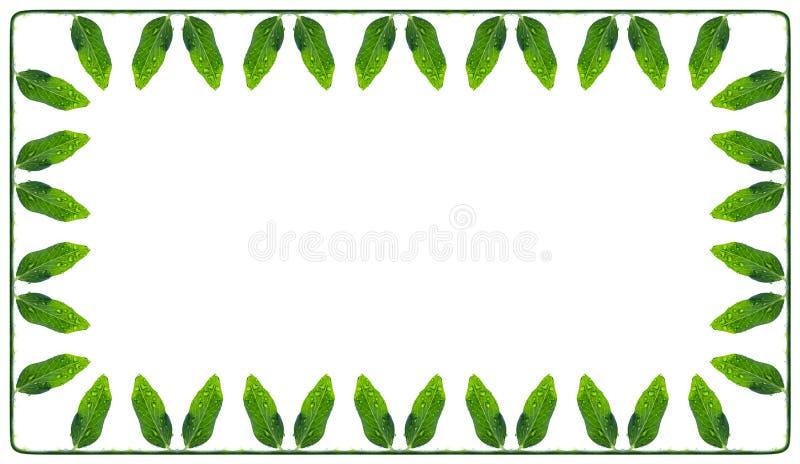 La struttura rettangolare di un verde e di un succulente lascia i piselli immagini stock