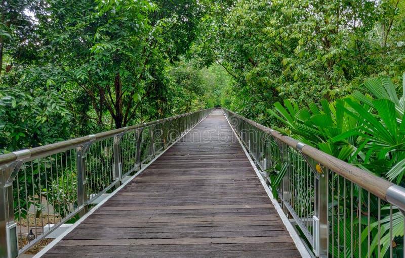 La sua a immagina il modo della foto del porto Si è situato in Malesia Putrajaya Taman botanico fotografia stock libera da diritti