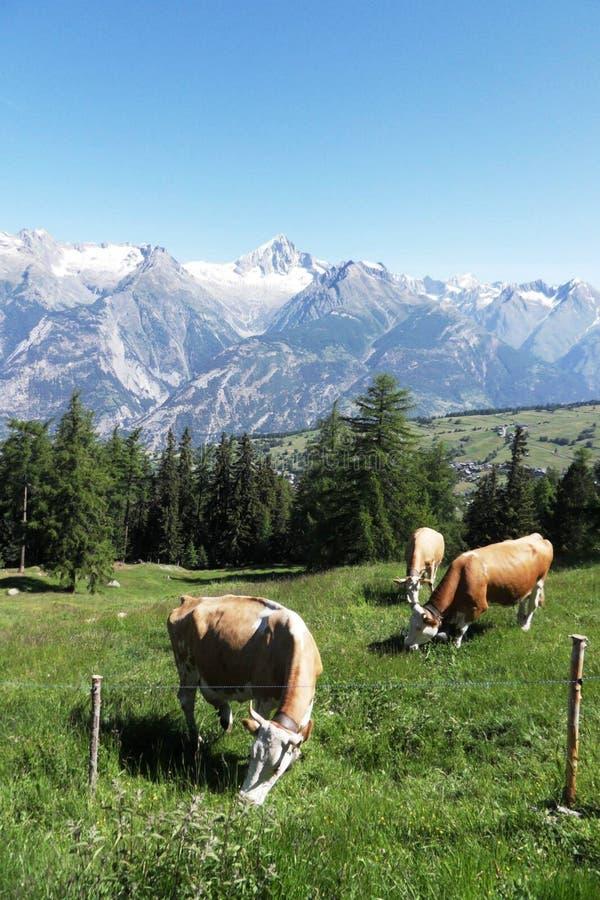 La Suisse l'été images libres de droits