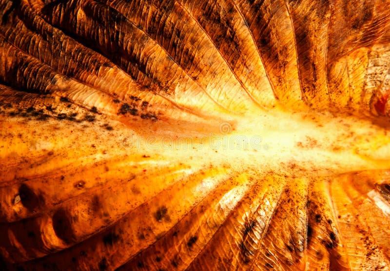 La surface d'une lame d'automne au soleil photos stock