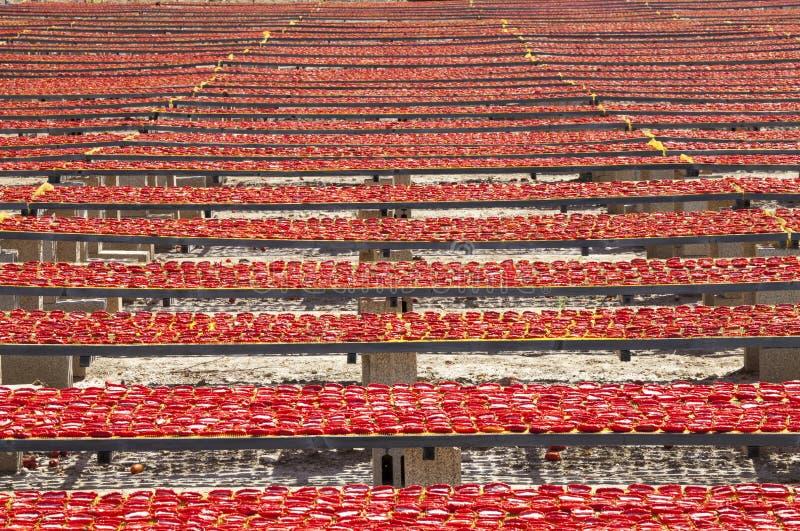 La surface infinie étonnante de disposition du rouge a séché des tomates images libres de droits