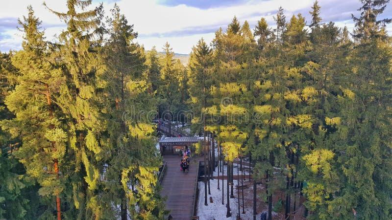 La surveillance de Lipno d'arbres de traînée photos libres de droits
