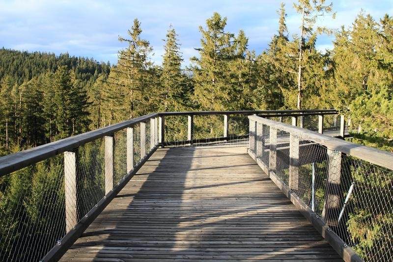 La surveillance de Lipno d'arbres de traînée photos stock